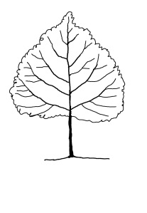 leaf tree completed drawing4