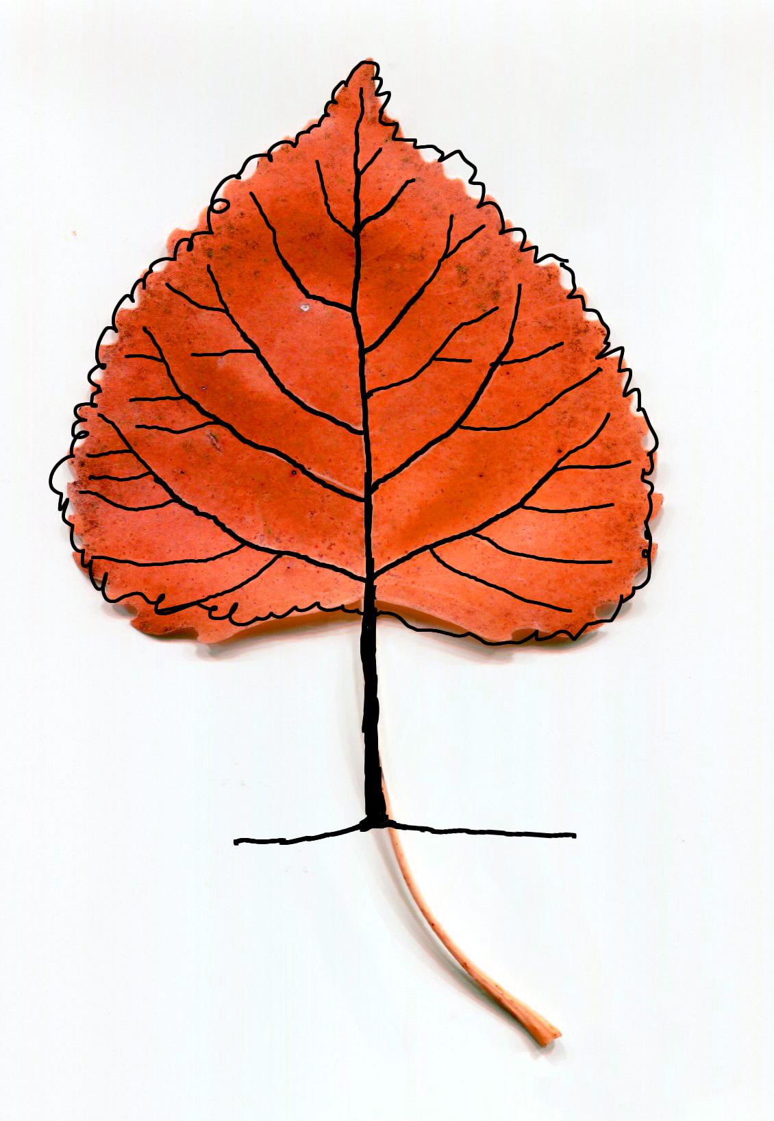 trees u2026they u0027re everywhere draw with rich